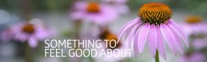 Nicky-Gibney-Homeopathy-Echinacea